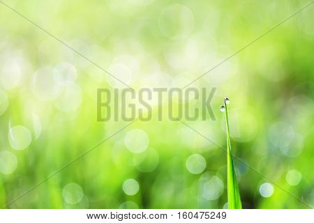 lush green grass is covered with shiny drops of morning dew