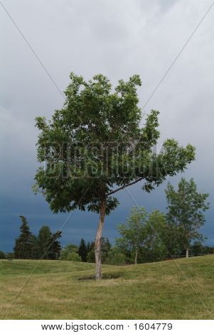 Tree Under Storm Clouds