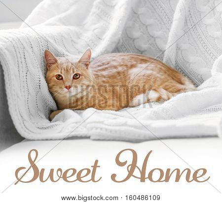 Cute cat lying on coach. Text SWEET HOME.