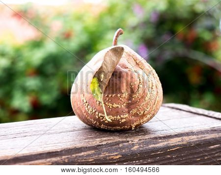 The nature vegetable colored rotten Apple.