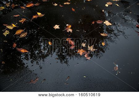 Autumn leaves and reflection of the tree they fell from in a puddle in an asphalt driveway