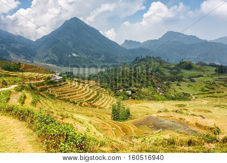 View Of Rice Terraces In The Hoang Lien Mountains, Vietnam