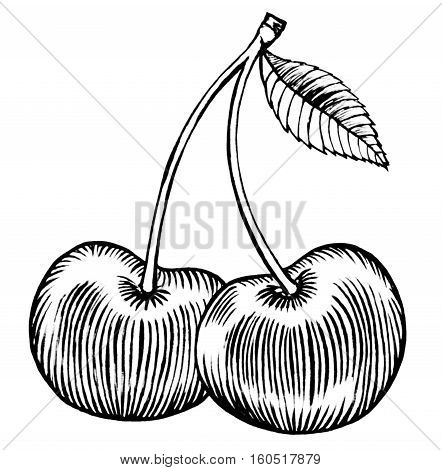Cherry Merry pair fruits, black ink drawing illustration