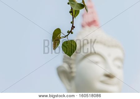 Bo leafs White Buddha statue background in temple thailand