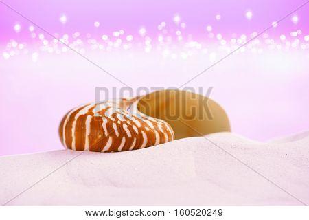 nautilus sea shell on white sand with festive glitter background