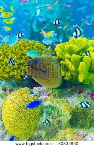 Underwater Moray Eel Coral Reef Aquarium V