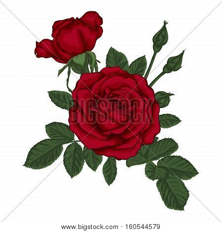 beautiful bouquet with red roses and leaves. Floral arrangement. design greeting card and invitation of the wedding birthday Valentine's Day mother's day and other holiday.