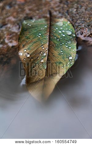 Autumn leaf in puddle, water drops on leaf