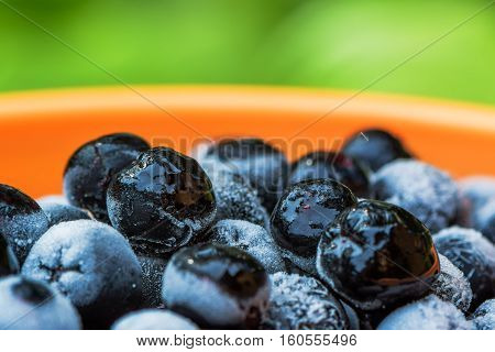 Frozen aronia chokeberry berries in a bowl powerful antioxidant fruit