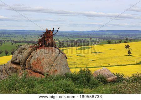 Tree Stump On A Rock