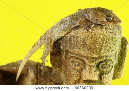Gecko Lizard And Mayan Statue