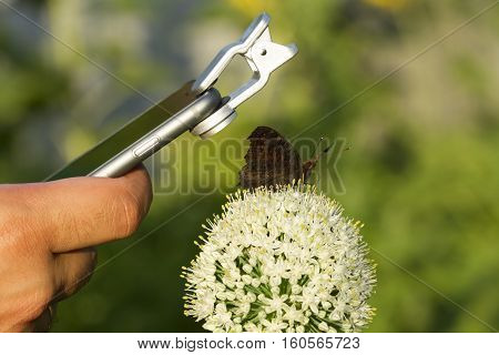 Man making photo of butterfly sitting on the flower by phone with macro lenz