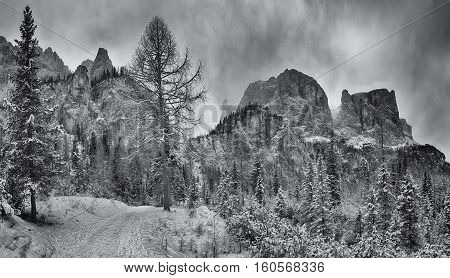 Mountain path through the forest with peak of Sella Group in the background Alta Badia - Dolomiti