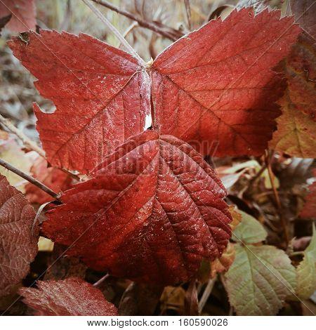 mobile photo autumn leaf treated VSCO with a4 preset