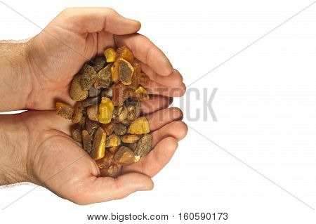 handful of large pieces of amber in palms on white background poster