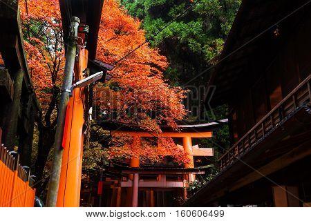 Autumn Colors At Fuhimi Inari, Kyoto