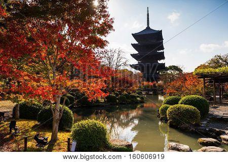 Toji Temple At Autumn, Kyoto