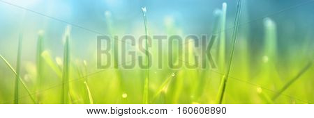 Grass. Fresh green spring grass with dew drops closeup. Sun. Soft Focus. Abstract Nature Background, border design panoramic banner