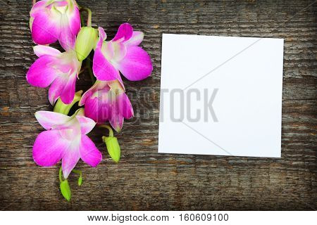 Pink orchid flowers on old wooden background