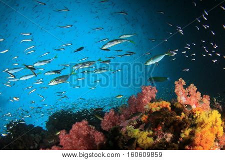 Underwater fish and coral reef in ocean