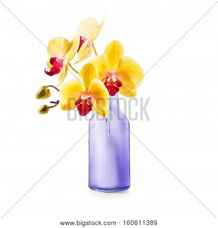 Yellow orchid flowers in bottle vase isolated on white background. Single object with clipping path. Design element