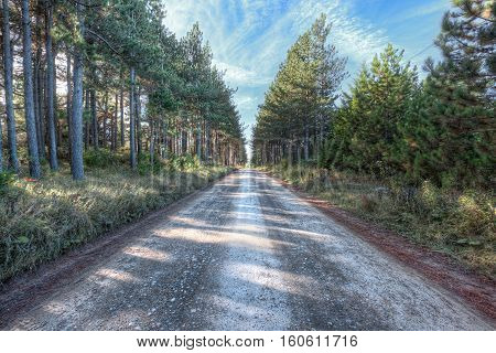 Dirt paved rocky road through pine forest in Dolly Sods, West Virginia