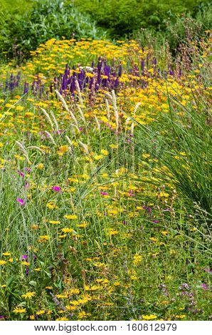 Wildflower field garden summer spring colourful plants outdoors blooming flowers