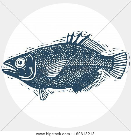 Vector Drawn Freshwater Fish Silhouette, Natural Graphic Symbol. Fauna And Wildlife Element, Zoology