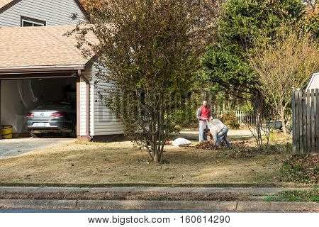 Fairfax, USA - November 24, 2016: Two people gathering fallen leaves in bags during autumn in neighborhood