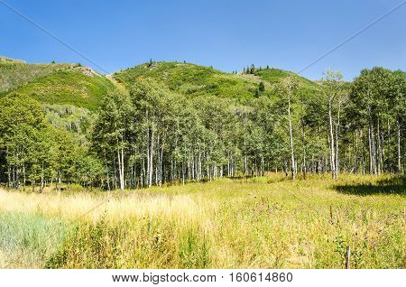 Meadow and forest with hills in in Utah's Wasatch Range