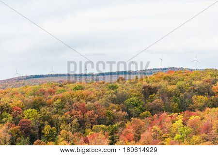 Sunny colorful red forest during autumn on mountain in West Virginia with wind turbines