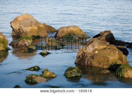 Berkeley Marina Shore