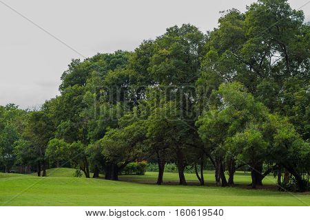 Tree at the gress field in the garden