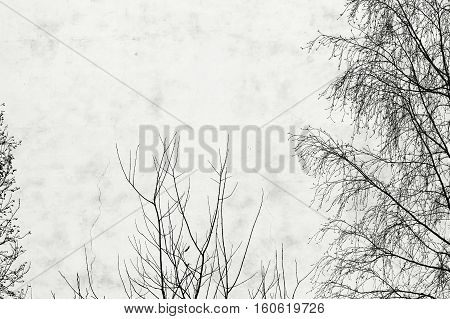 photo birch tree and the window on the background of old houses with windows and plastered white plaster.