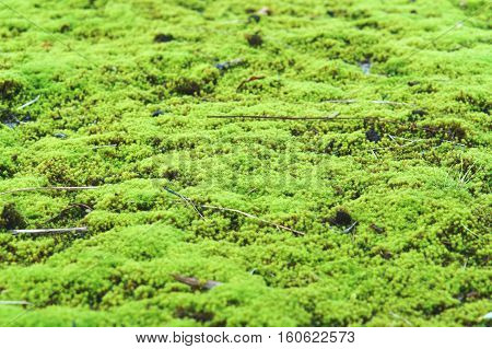 moss green plant forest moss, green, abstract