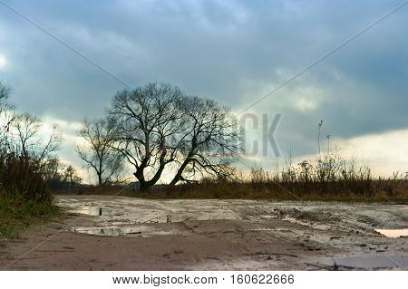 a lonely tree standing by the roadside on the roadside at sunset in cloudy overcast weather
