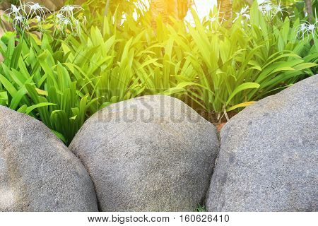 three big rocks in the front with plant in background