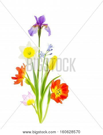 Spring flower bouquet of tulips iris daffodils and agapanthus isolated on white background.