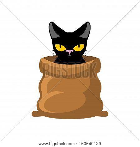 Cat In Bag. Pet In Sack. Allegory Bad Buy