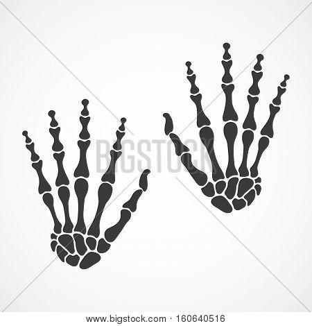 Bones of both hands on light background. Skeleton hand. Vector illustration. The skeleton human hand.