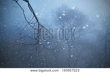 The Snow Falls In The Mystic Wild Forest