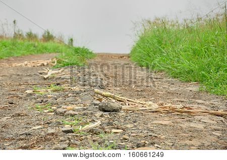 Gravel road in Kwa Zulu Natal, South Africa