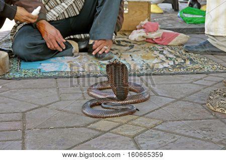 Snake charmers in Jemaa al Fnaa, Marrakech. MOROCCO.