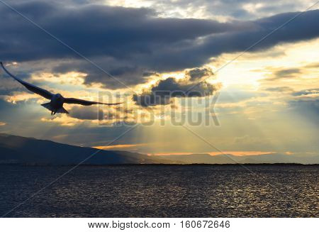 Bird flying on the sea at sunset, silhouette. Sun between clouds and seagulls flying.