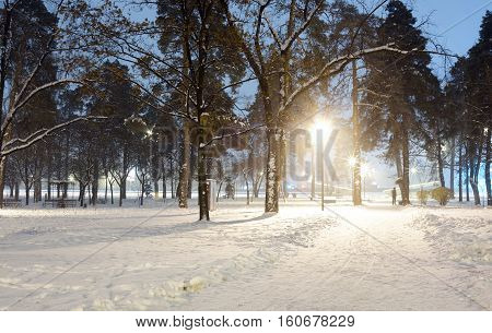 Snowy city park in light of lanterns at evening.Snow-covered trees and benchesfootpath in a fabulous winter night park.Winter landscape