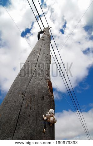 Old Aged Telephone Pole With Shells In The Desert Over A Blue Cloudy Sky