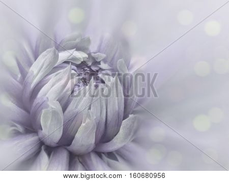 blurred background dahlia flower. flower on the blurred background. floral composition. floral background. Nature.