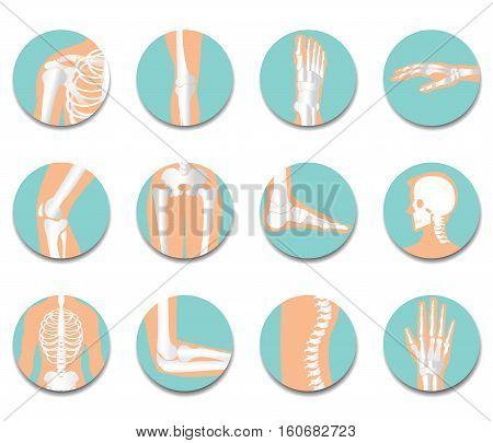 Orthopedic and spine icon set on white background bone x-ray image of human joints anatomy skeleton flat design vector illustration.