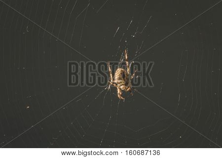 Close up of small spider in its web.