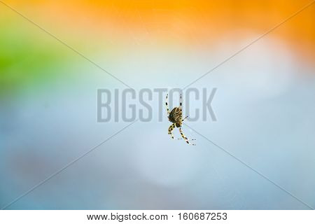 Orb Weaver Spider against colorful blurry  background.